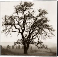 Country Oak Tree Fine-Art Print