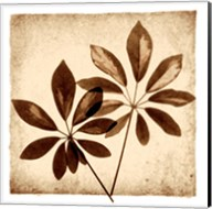 Cassava Leaves Fine-Art Print