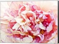 Monet's Peony I Fine-Art Print