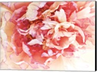 Monet's Peony II Fine-Art Print