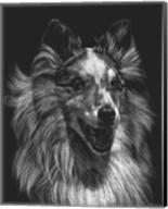 Canine Scratchboard VIII Fine-Art Print