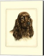 Red Cocker Spaniel Fine-Art Print