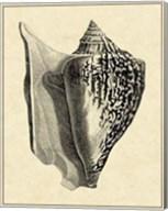 Vintage Shell IV Fine-Art Print