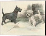 Two Scotties Fine-Art Print