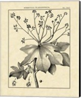 Vintage Botanical Study I Fine-Art Print