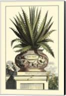 Antique Munting Aloe I Fine-Art Print
