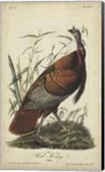 Audubon Wild Turkey Fine-Art Print