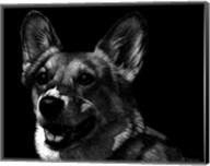 Canine Scratchboard XXIX Fine-Art Print