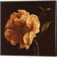 Floral Symposium II Fine-Art Print