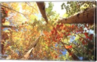Forest Canopy Fine-Art Print