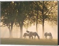 Horses in the mist Fine-Art Print