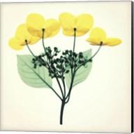 Hydrangea Stem II Fine-Art Print