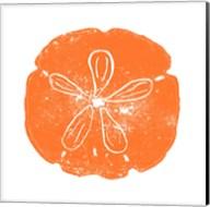 Orange Sand Dollar Fine-Art Print