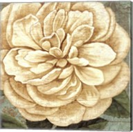 Camellia Study II Fine-Art Print