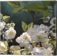 White Roses I Fine-Art Print