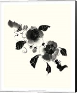 Studies in Ink - Camellia Fine-Art Print