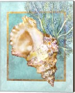 Conch Shell and Coral Fine-Art Print