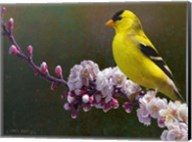 Goldfinch Flowers Fine-Art Print
