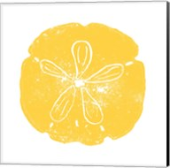Yellow Sand Dollar Fine-Art Print