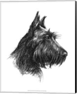 Canine Study II Fine-Art Print