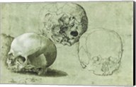 Study of Three Skulls Fine-Art Print