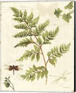 Ivies and Ferns I Fine-Art Print
