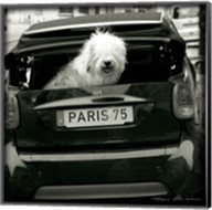 Paris Dog I Fine-Art Print