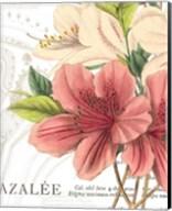 Azalee Jardin I Fine-Art Print