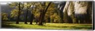 Trees near the El Capitan, Yosemite National Park, California, USA Fine-Art Print