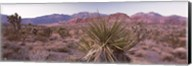 Yucca plant in a desert, Red Rock Canyon, Las Vegas, Nevada, USA Fine-Art Print