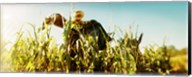 Scarecrow in a corn field, Queens County Farm, Queens, New York City, New York State, USA Fine-Art Print