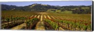 Vineyard, Geyserville, California, USA Fine-Art Print