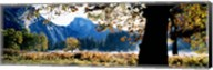 Half Dome, Yosemite National Park, California, USA Fine-Art Print