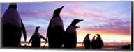Silhouette of a group of Gentoo penguins, Falkland Islands (Pygoscelis papua) Fine-Art Print