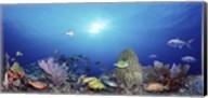 School of fish swimming in the sea Fine-Art Print