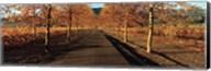 Vineyards along a road, Beaulieu Vineyard, Napa Valley, California, USA Fine-Art Print