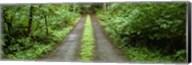 Lush foliage lining a wet driveway, Bainbridge Island, Washington, USA Fine-Art Print