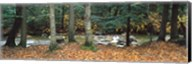 River flowing through a forest, White Mountain National Forest, New Hampshire, USA Fine-Art Print
