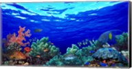 Underwater view of Pallid triggerfish, Oriental Sweetlips and Longfin bannerfish with Yellowbar Angelfish Fine-Art Print