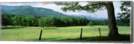 Meadow Surrounded By Barbed Wire Fence, Cades Cove, Great Smoky Mountains National Park, Tennessee, USA Fine-Art Print