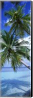 Maldives Palm Trees Fine-Art Print