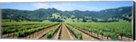 Napa Valley Vineyards Hopland, CA Fine-Art Print