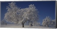 Two people horseback riding through cherry trees on a snow covered landscape, Aargau, Switzerland Fine-Art Print