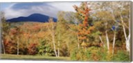 Trees on a field in front of a mountain, Mount Washington, White Mountain National Forest, Bartlett, New Hampshire, USA Fine-Art Print