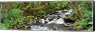 Creek Olympic National Park WA USA Fine-Art Print