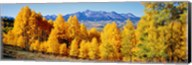 Fall Aspen Trees Telluride CO Fine-Art Print