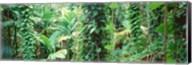 Vegetation Seychelles Fine-Art Print