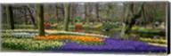 Keukenhof Garden Lisse The Netherlands Fine-Art Print