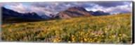 Flowers in a field, Glacier National Park, Montana, USA Fine-Art Print