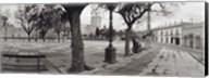 Trees in front of a building, Alameda Vieja, Jerez, Cadiz, Spain Fine-Art Print